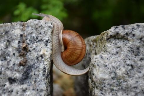 snail-1447233.jpg
